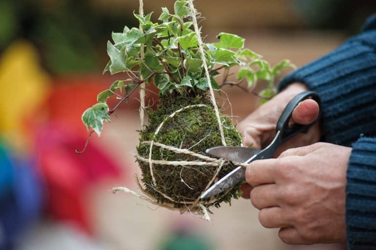 A découvrir : le Kokedama, petite œuvre d'art végétale