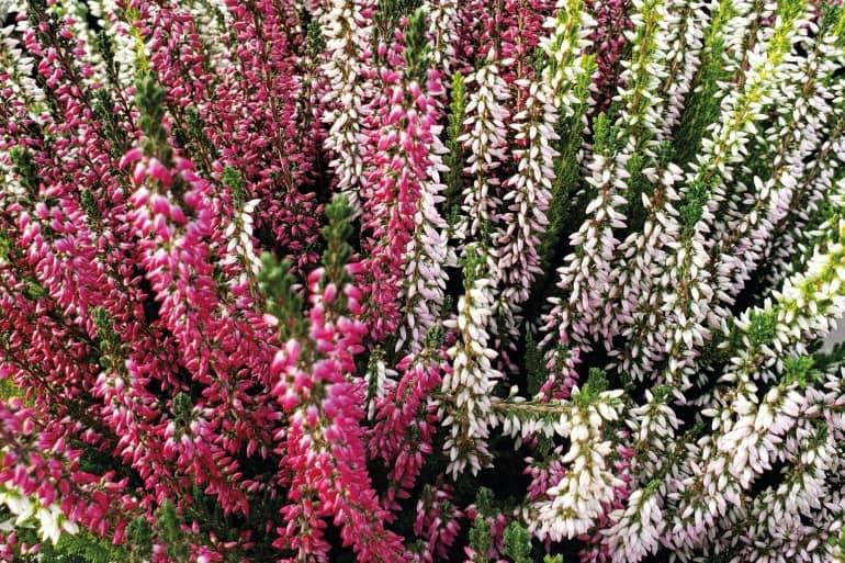 Jardinage : fleurir les Jardins du souvenir