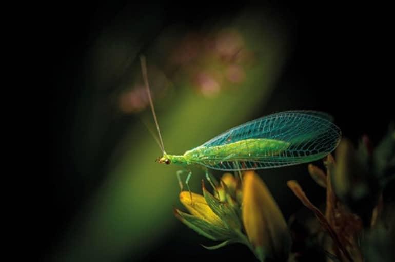 Biodiversité : les alliés naturels du jardinier